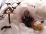 Die Vögel im Winter